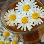 Las plantas medicinales tienen evidencia científica para su uso terapéutico
